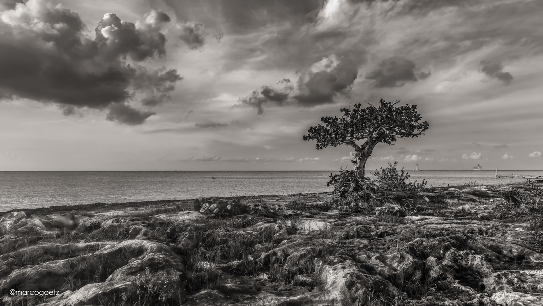 LITTLE-TREE COZUMEL MEXICO