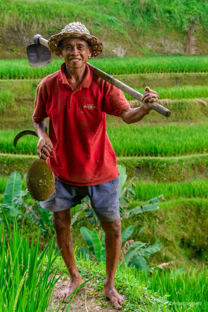 RICE FARM WORKER BALI INDONESIA